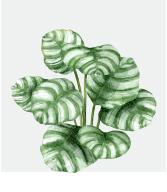 fotos_plantas_ibiza_botanico1