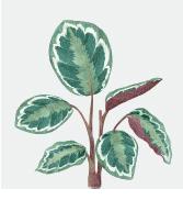 fotos_plantas_ibiza_botanico2