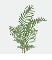 fotos_plantas_ibiza_botanico5