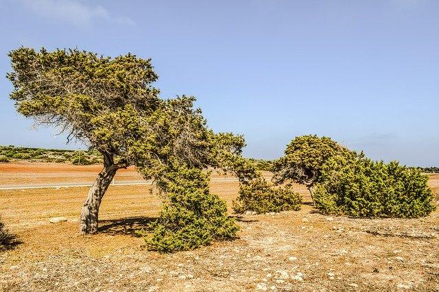 Flora de Formentera