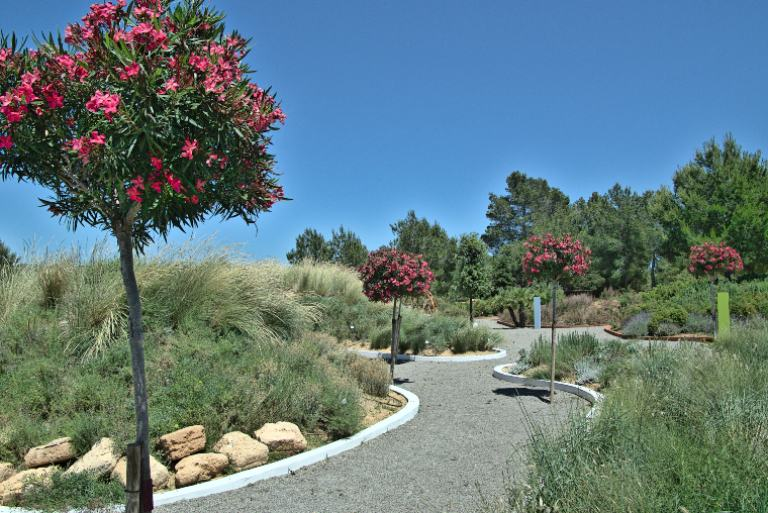 Habitat dunar
