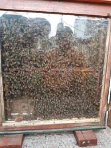 Talleres abejas