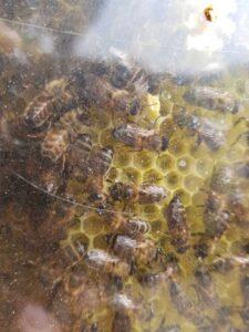 taller panal de abejas
